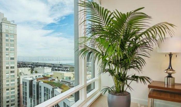 Plantas para apartamento: escolha a ideal para o seu espaço