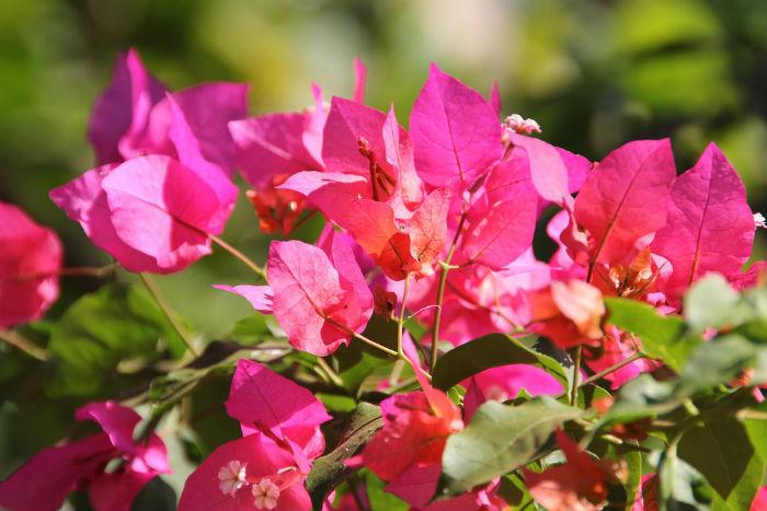 Flores de jardim: quais as melhores para pequenos espaços?