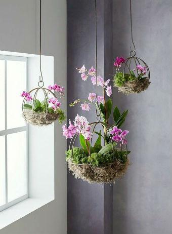 Vasos de orquídeas próximos à claridade da janela