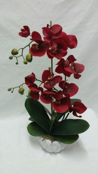 Orquídeas na cor marsala em vasos