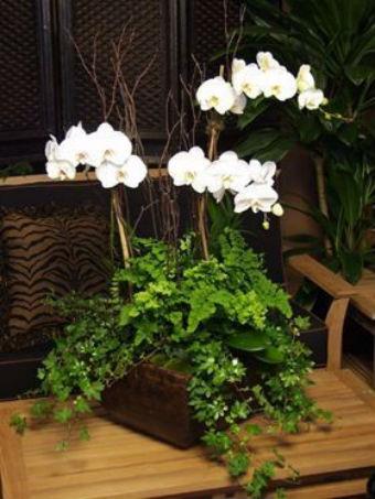 Um vaso de orquídeas brancas sobre uma mesa