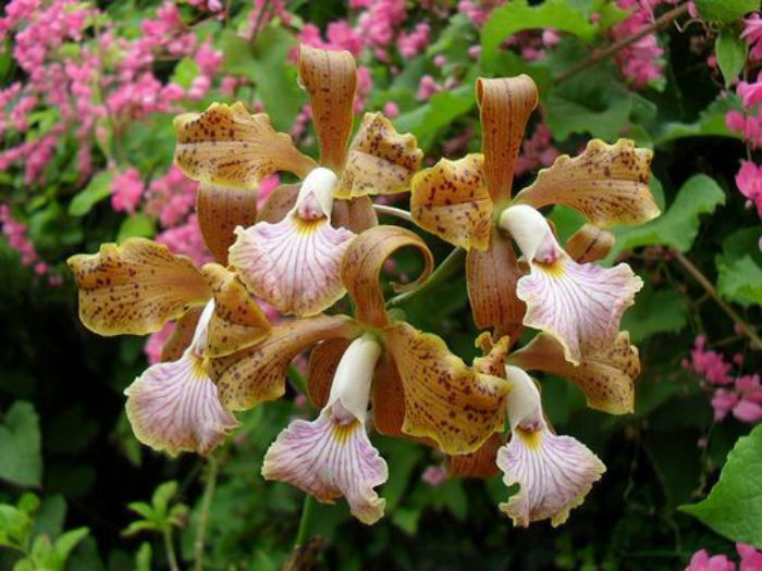 lindas orquídeas em jardim