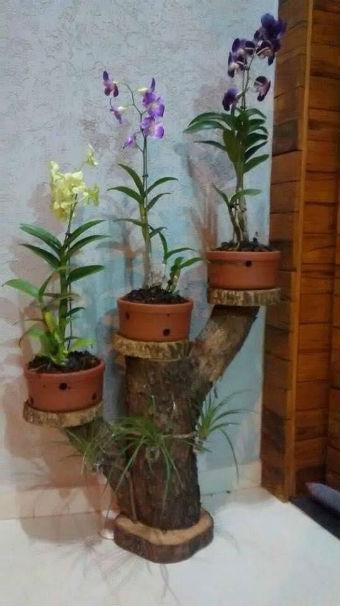 Três vasos de orquídeas sobre um tronco