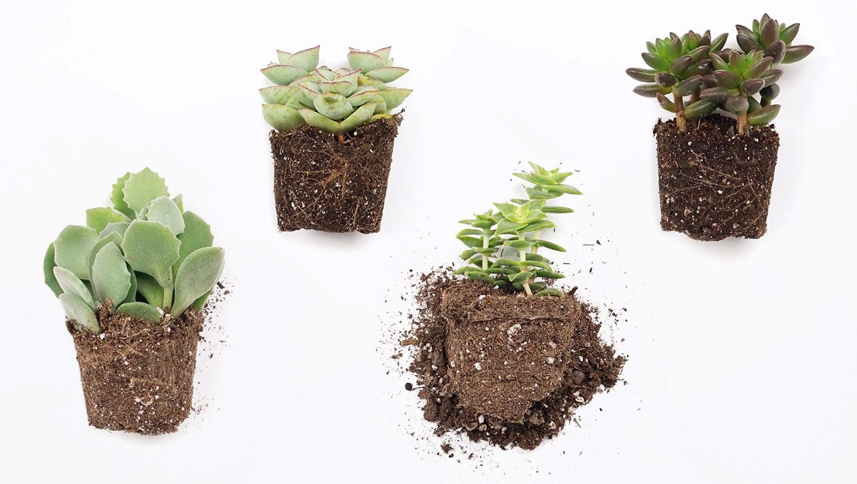 Terrário: plantinhas