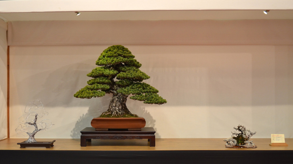 Bonsai: lindo