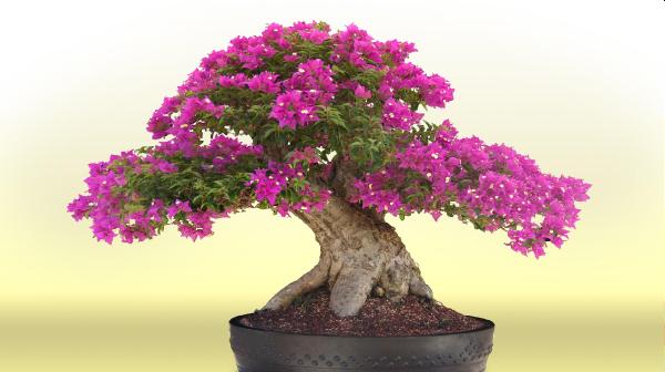 Bonsai: flores roxinhas